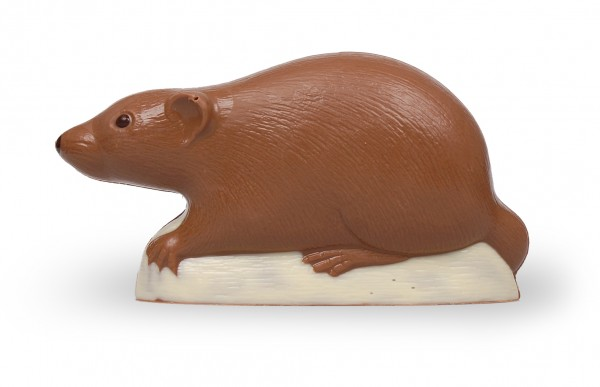 Ratte aus Schokolade